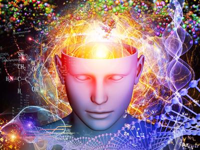 cerveau neurosciences