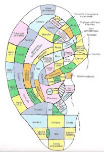 zones-reflexes-reflexologie-auriculaire