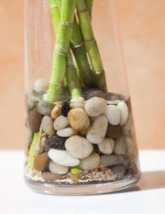 bambou et cailloux dans un vase