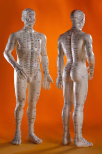 mannequins avec les méridiens de la medecine traditionnelle chinoise utilisé aussi en Tong Ren